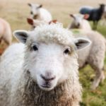 The Cost of Starting A Working Farm