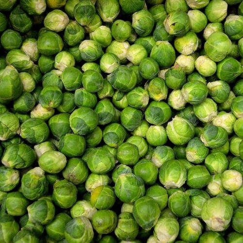 Adam Seger – Sprout Recipes To Turn The Biggest Haters